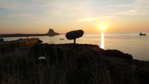 Grey Seals and Holy Island